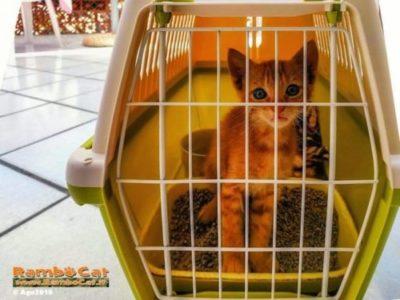 offerta trasportino lettiera gatto