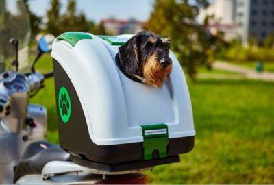miglior trasportino nero cane per auto