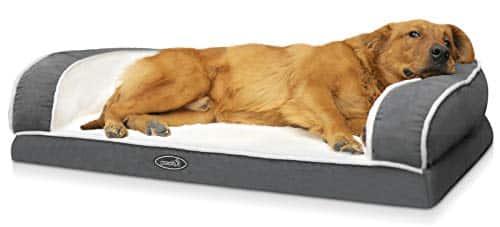 sconto divano per cane